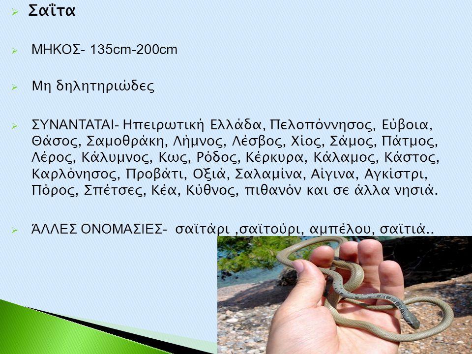  Σαΐτα  ΜΗΚΟΣ- 135cm-200cm  Μη δηλητηριώδες  ΣΥΝΑΝΤΑΤΑΙ- Ηπειρωτική Ελλάδα, Πελοπόννησος, Εύβοια, Θάσος, Σαμοθράκη, Λήμνος, Λέσβος, Χίος, Σάμος, Π