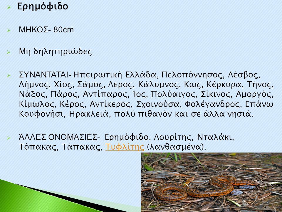  Ερημόφιδο  ΜΗΚΟΣ- 80cm  Μη δηλητηριώδες  ΣΥΝΑΝΤΑΤΑΙ- Ηπειρωτική Ελλάδα, Πελοπόννησος, Λέσβος, Λήμνος, Χίος, Σάμος, Λέρος, Κάλυμνος, Κως, Κέρκυρα,