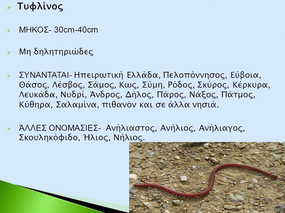  Τυφλίνος  ΜΗΚΟΣ- 30cm-40cm  Μη δηλητηριώδες  ΣΥΝΑΝΤΑΤΑΙ- Ηπειρωτική Ελλάδα, Πελοπόννησος, Εύβοια, Θάσος, Λέσβος, Σάμος, Κως, Σύμη, Ρόδος, Σκύρος,