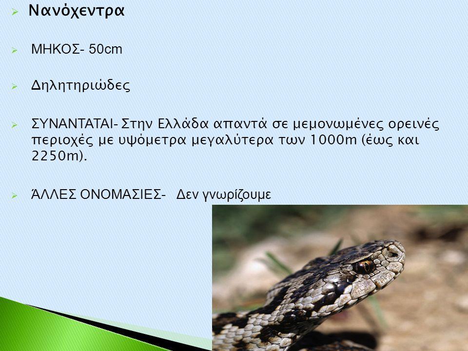  Νανόχεντρα  ΜΗΚΟΣ- 50cm  Δηλητηριώδες  ΣΥΝΑΝΤΑΤΑΙ- Στην Ελλάδα απαντά σε μεμονωμένες ορεινές περιοχές με υψόμετρα μεγαλύτερα των 1000m (έως και 2