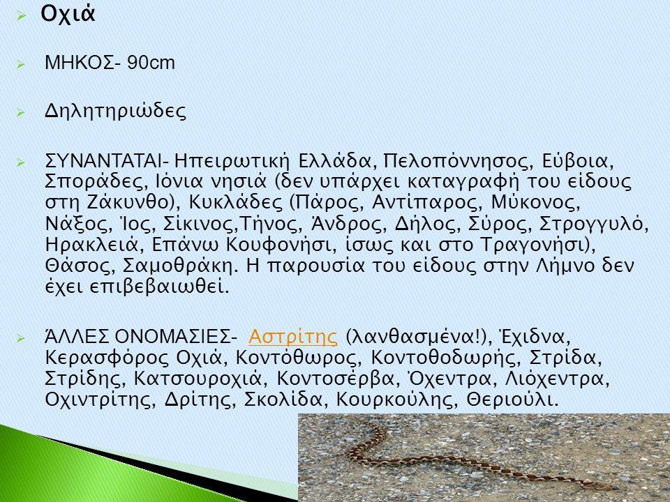  Οχιά  ΜΗΚΟΣ- 90cm  Δηλητηριώδες  ΣΥΝΑΝΤΑΤΑΙ- Ηπειρωτική Ελλάδα, Πελοπόννησος, Εύβοια, Σποράδες, Ιόνια νησιά (δεν υπάρχει καταγραφή του είδους στη