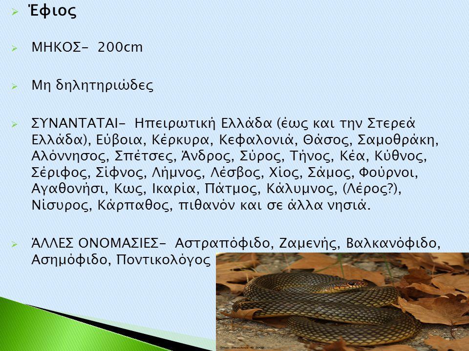  Έφιος  ΜΗΚΟΣ- 200cm  Μη δηλητηριώδες  ΣΥΝΑΝΤΑΤΑΙ- Ηπειρωτική Ελλάδα (έως και την Στερεά Ελλάδα), Εύβοια, Κέρκυρα, Κεφαλονιά, Θάσος, Σαμοθράκη, Αλ