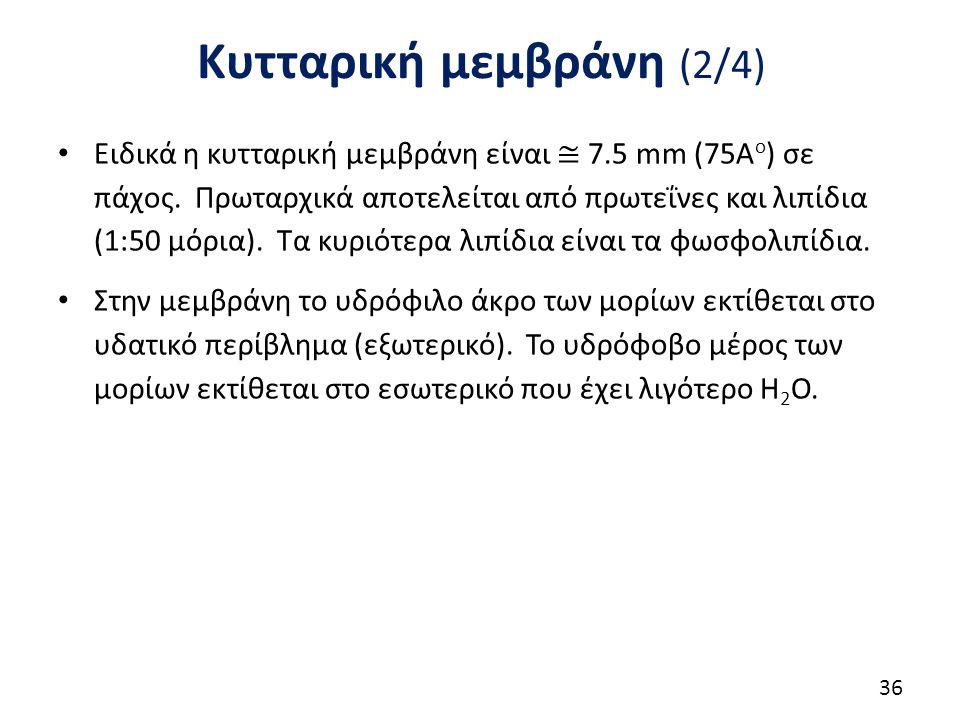 Κυτταρική μεμβράνη (2/4) 36