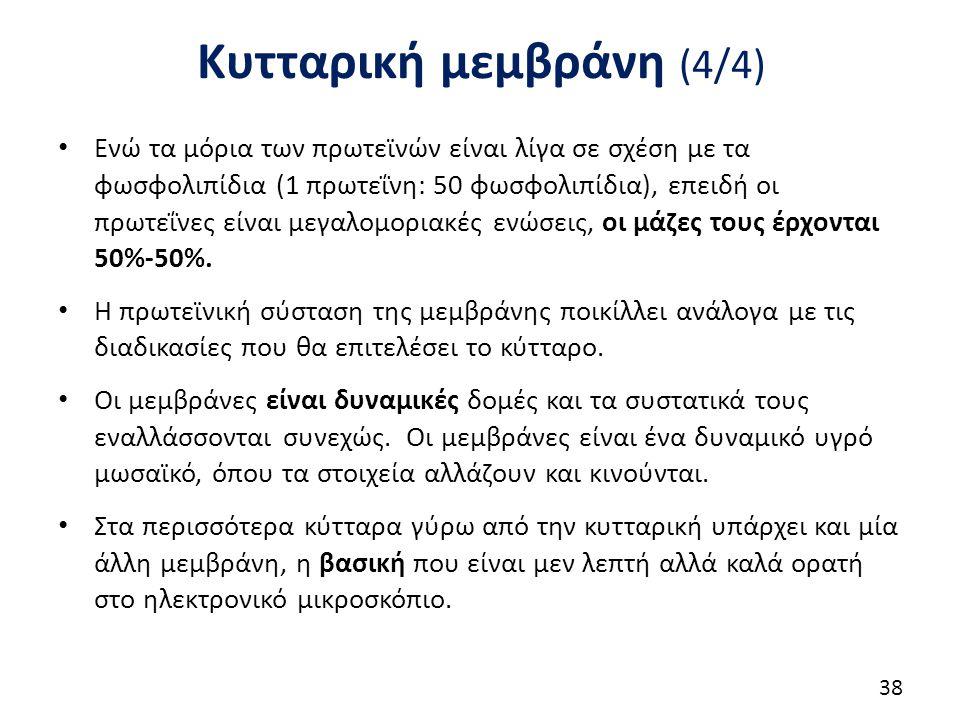 Κυτταρική μεμβράνη (4/4) Ενώ τα μόρια των πρωτεϊνών είναι λίγα σε σχέση με τα φωσφολιπίδια (1 πρωτεΐνη: 50 φωσφολιπίδια), επειδή οι πρωτεΐνες είναι με
