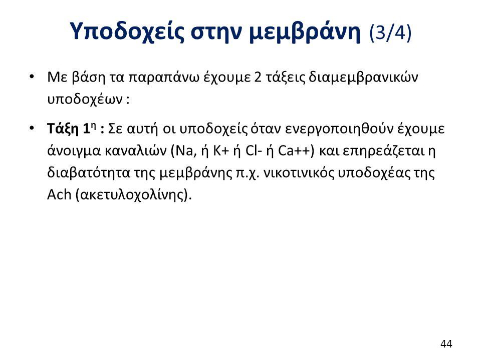 Υποδοχείς στην μεμβράνη (3/4) Με βάση τα παραπάνω έχουμε 2 τάξεις διαμεμβρανικών υποδοχέων : Τάξη 1 η : Σε αυτή οι υποδοχείς όταν ενεργοποιηθούν έχουμ