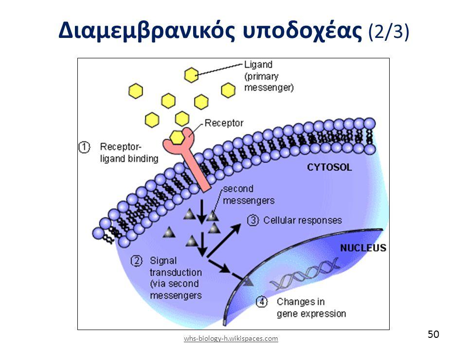 Διαμεμβρανικός υποδοχέας (2/3) 50 whs-biology-h.wikispaces.com