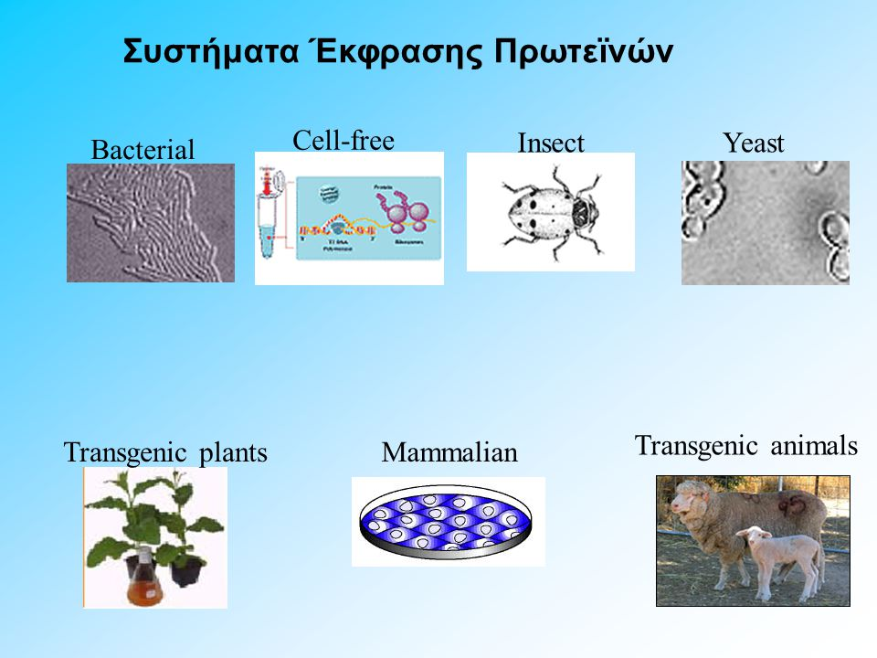 Cell-free Bacterial YeastInsect Mammalian Συστήματα Έκφρασης Πρωτεϊνών Transgenic animals Transgenic plants