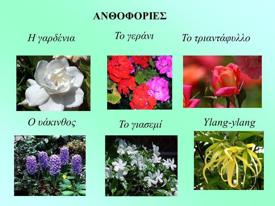 ΑΝΘΟΦΟΡΙΕΣ Η γαρδένια Το γεράνι Ο υάκινθος Το γιασεμί Το τριαντάφυλλο Ylang-ylang