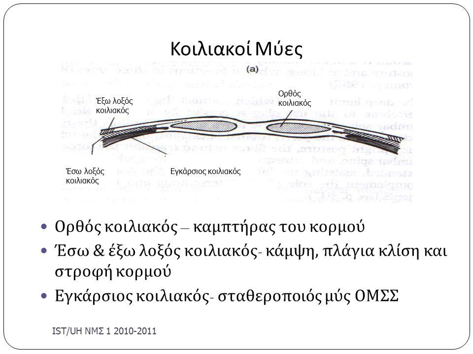 Κοιλιακοί Μύες IST/U Η ΝΜΣ 1 2010-2011 Ορθός κοιλιακός – καμπτήρας του κορμού Έσω & έξω λοξός κοιλιακός - κάμψη, πλάγια κλίση και στροφή κορμού Εγκάρσιος κοιλιακός - σταθεροποιός μύς ΟΜΣΣ Έξω λοξός κοιλιακός Έσω λοξός κοιλιακός Εγκάρσιος κοιλιακός Ορθός κοιλιακός