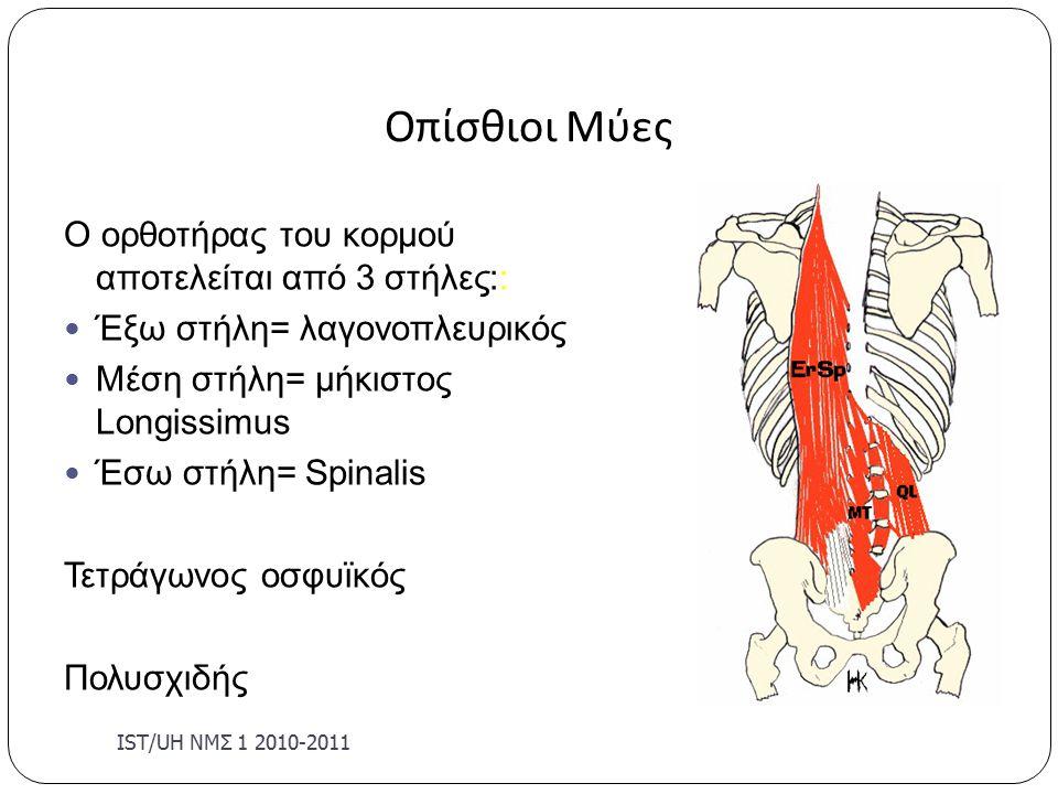 Οπίσθιοι Μύες Ο ορθοτήρας του κορμού αποτελείται από 3 στήλες:: Έξω στήλη= λαγονοπλευρικός Μέση στήλη= μήκιστος Longissimus Έσω στήλη= Spinalis Τετράγωνος οσφυϊκός Πολυσχιδής IST/U Η ΝΜΣ 1 2010-2011