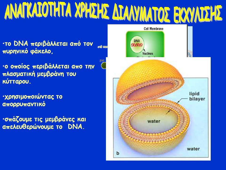 το DNA περιβάλλεται από τον πυρηνικό φάκελο, ο οποίος περιβάλλεται απο την πλασματική μεμβράνη του κύτταρου. χρησιμοποιώντας το απορρυπαντικό σπάζουμε