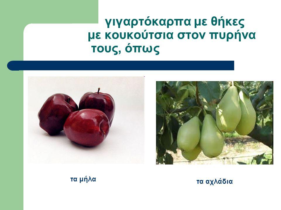γιγαρτόκαρπα με θήκες με κουκούτσια στον πυρήνα τους, όπως τα αχλάδια τα μήλα
