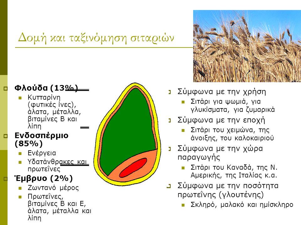 Δομή και ταξινόμηση σιταριών  Φλούδα (13%) Κυτταρίνη (φυτικές ίνες), άλατα, μέταλλα, βιταμίνες Β και λίπη  Ενδοσπέρμιο (85%) Ενέργεια Υδατάνθρακες κ