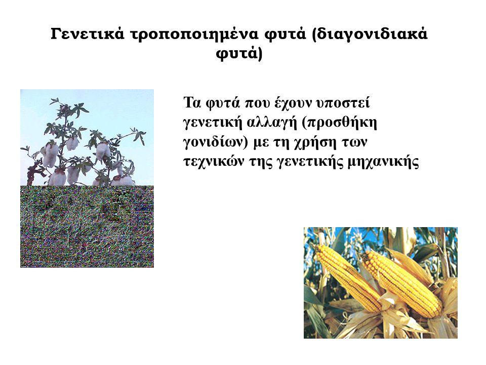 Γενετικά τροποποιημένα φυτά (διαγονιδιακά φυτά) Τα φυτά που έχουν υποστεί γενετική αλλαγή (προσθήκη γονιδίων) με τη χρήση των τεχνικών της γενετικής μ