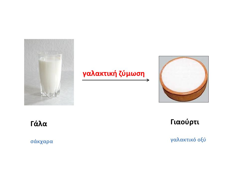 Γάλα σάκχαρα Γιαούρτι γαλακτικό οξύ γαλακτική ζύμωση