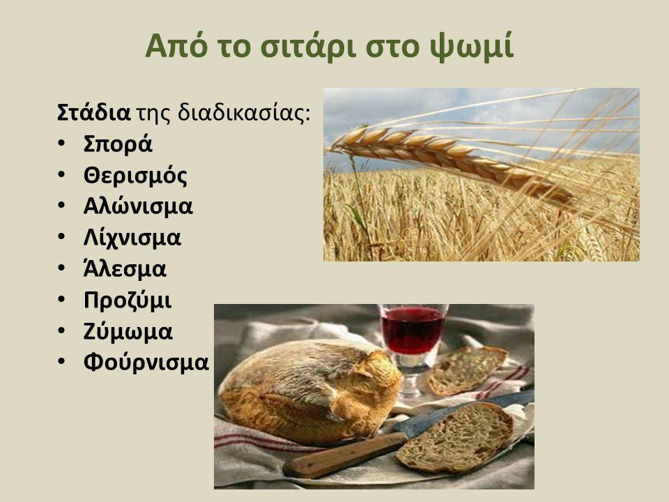 Από το σιτάρι στο ψωμί Στάδια της διαδικασίας: Σπορά Θερισμός Αλώνισμα Λίχνισμα Άλεσμα Προζύμι Ζύμωμα Φούρνισμα