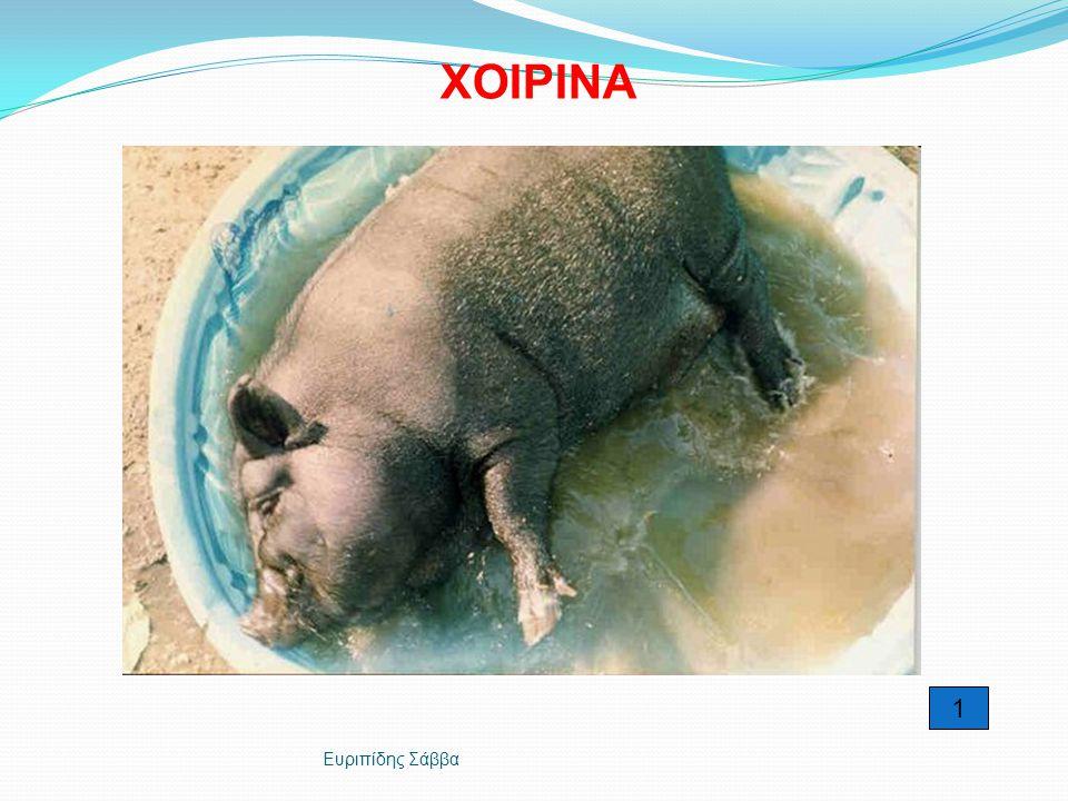 ΧΟΙΡΙΝΑ 1 Ευριπίδης Σάββα