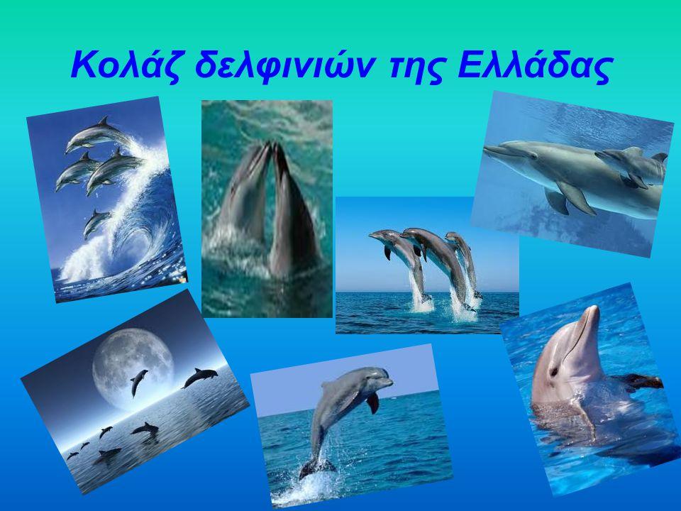 Κολάζ δελφινιών της Ελλάδας