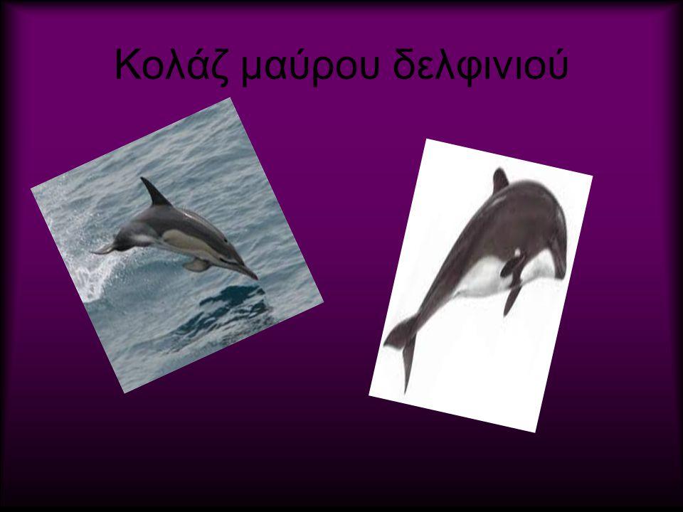 Κολάζ μαύρου δελφινιού