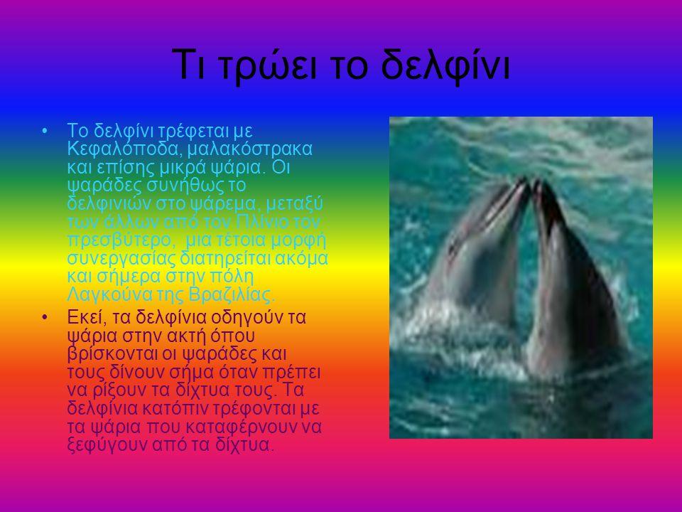 Τι τρώει το δελφίνι Το δελφίνι τρέφεται με Κεφαλόποδα, μαλακόστρακα και επίσης μικρά ψάρια. Οι ψαράδες συνήθως το δελφινιών στο ψάρεμα, μεταξύ των άλλ