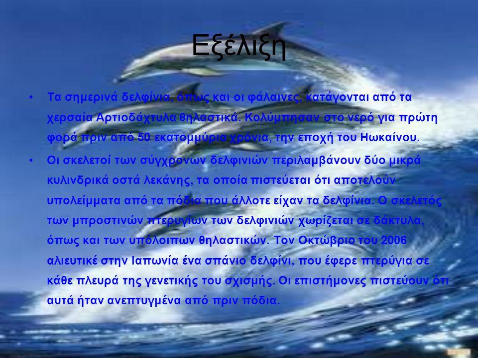 Εξέλιξη Τα σημερινά δελφίνια, όπως και οι φάλαινες, κατάγονται από τα χερσαία Αρτιοδάχτυλα θηλαστικά. Κολύμπησαν στο νερό για πρώτη φορά πριν από 50 ε
