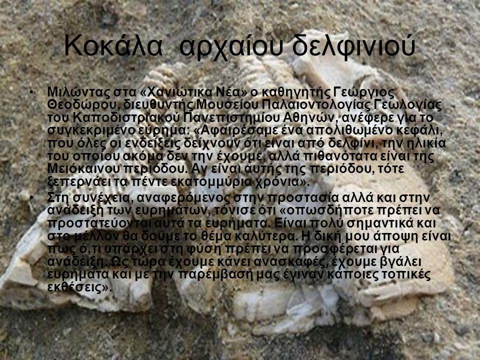 Κοκάλα αρχαίου δελφινιού Μιλώντας στα «Χανιώτικα Νέα» ο καθηγητής Γεώργιος Θεοδώρου, διευθυντής Μουσείου Παλαιοντολογίας Γεωλογίας του Καποδιστριακού