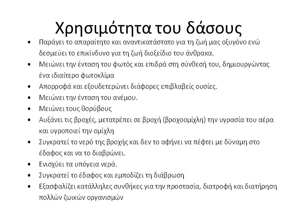 ΚΑΤΑΣΚΕΥΗ ΜΑΚΕΤΑΣ ΚΑΜΕΝΟΥ ΔΑΣΟΥΣ