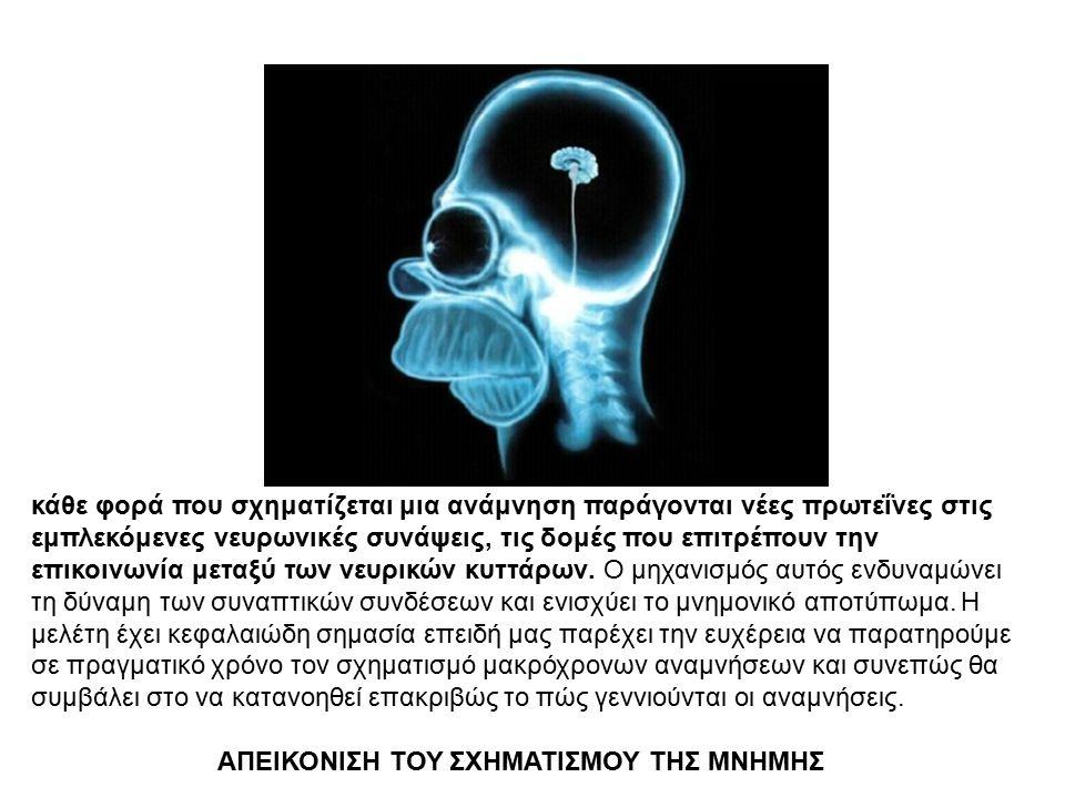 κάθε φορά που σχηματίζεται μια ανάμνηση παράγονται νέες πρωτεΐνες στις εμπλεκόμενες νευρωνικές συνάψεις, τις δομές που επιτρέπουν την επικοινωνία μετα