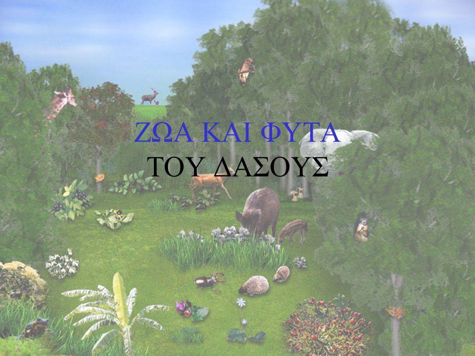 TA ZΩΑ ΑΙΝΙΓΜΑ - Ντούκου, ντούκου μες στο δάσος.