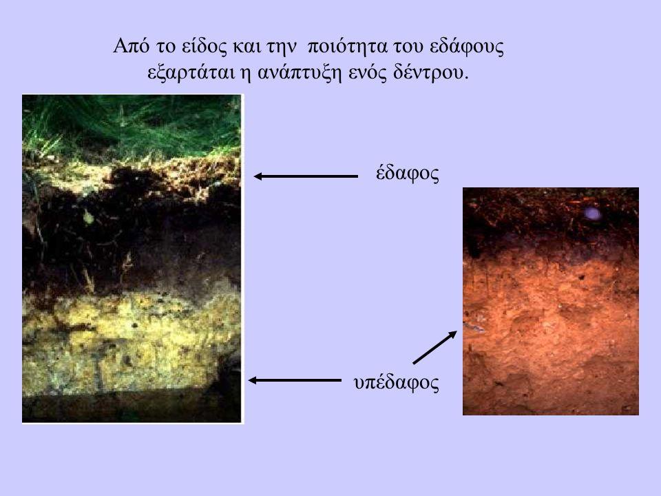 Από το είδος και την ποιότητα του εδάφους εξαρτάται η ανάπτυξη ενός δέντρου. έδαφος υπέδαφος