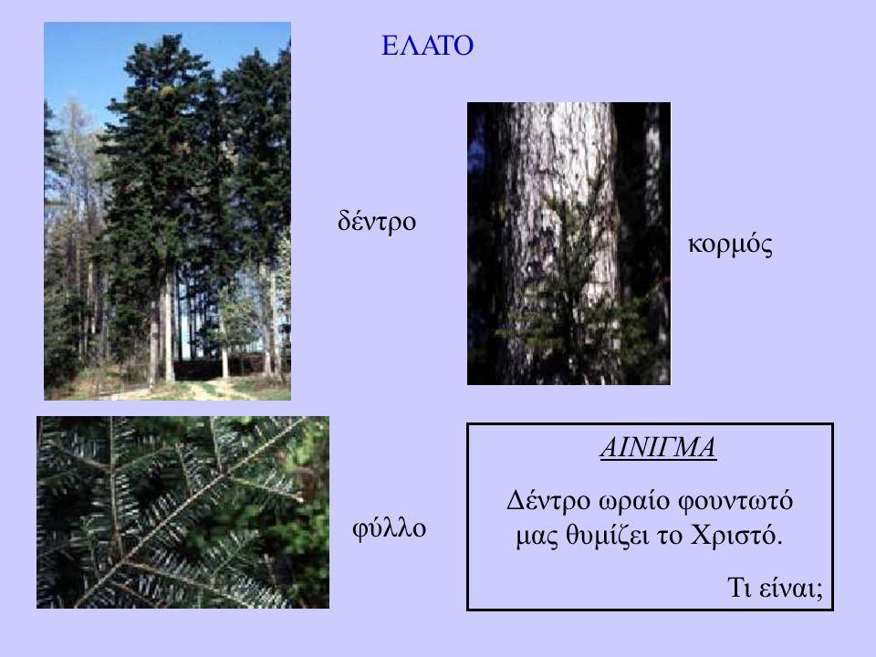 ΕΛΑΤΟ δέντρο κορμός φύλλο ΑΙΝΙΓΜΑ Δέντρο ωραίο φουντωτό μας θυμίζει το Χριστό. Τι είναι;