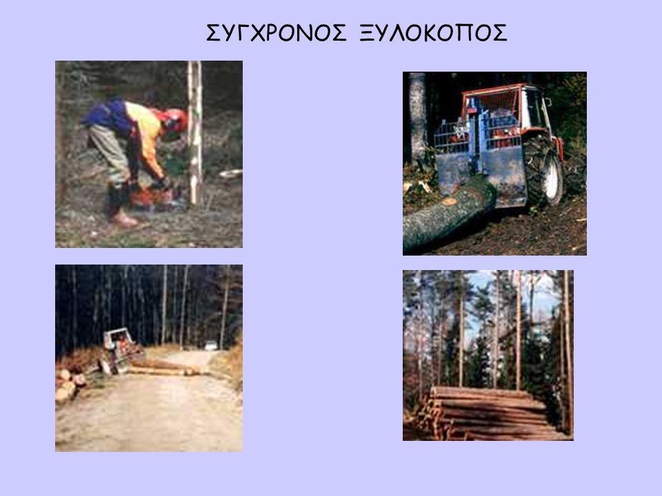 Αυτό το σκαθάρι είναι ο καταστροφέας του δάσους.Μπορεί να καταστρέψει ολόκληρο δάσος από δέντρα.