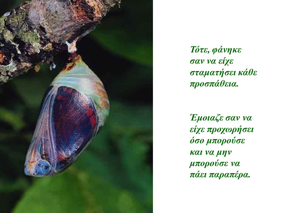 Τότε ο άντρας αποφάσισε να βοηθήσει την πεταλούδα, πήρε ένα ψαλίδι και άνοιξε το κουκούλι.