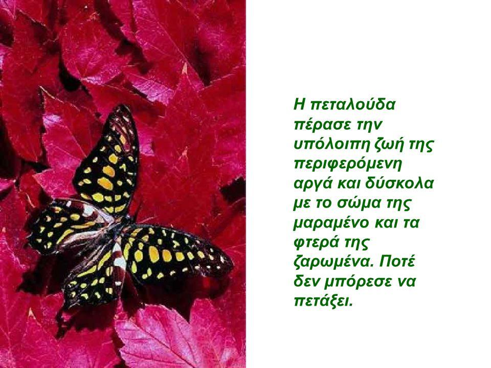 Η πεταλούδα πέρασε την υπόλοιπη ζωή της περιφερόμενη αργά και δύσκολα με το σώμα της μαραμένο και τα φτερά της ζαρωμένα.