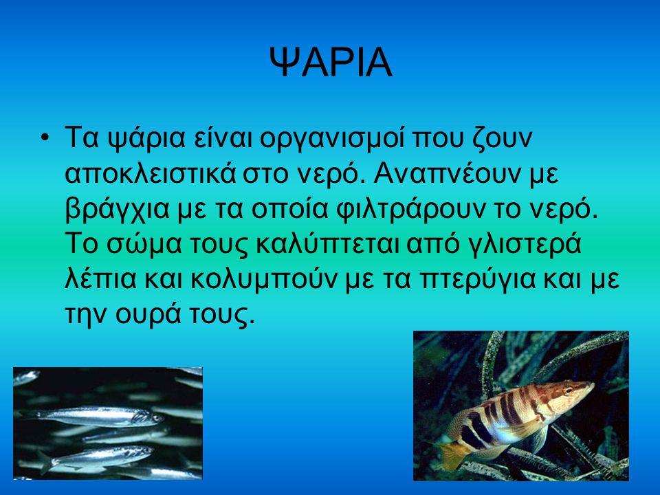 ΨΑΡΙΑ Τα ψάρια είναι οργανισμοί που ζουν αποκλειστικά στο νερό. Αναπνέουν με βράγχια με τα οποία φιλτράρουν το νερό. Το σώμα τους καλύπτεται από γλιστ