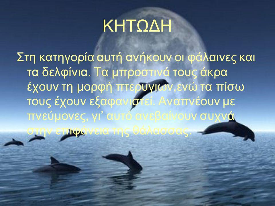 ΚΗΤΩΔΗ Στη κατηγορία αυτή ανήκουν οι φάλαινες και τα δελφίνια. Τα μπροστινά τους άκρα έχουν τη μορφή πτερυγιων,ενώ τα πίσω τους έχουν εξαφανιστεί. Ανα