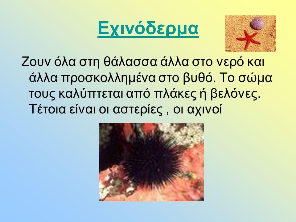 Εχινόδερμα Ζουν όλα στη θάλασσα άλλα στο νερό και άλλα προσκολλημένα στο βυθό. Το σώμα τους καλύπτεται από πλάκες ή βελόνες. Τέτοια είναι οι αστερίες,