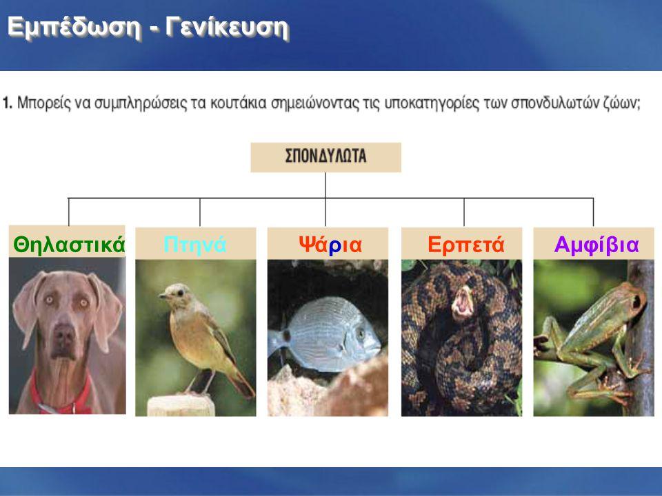 Εμπέδωση - Γενίκευση ΑμφίβιαΕρπετάΨάριαΠτηνά Θηλαστικά