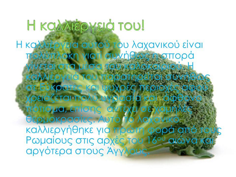 Η καλλιέργεια αυτού του λαχανικού είναι πολύπλοκη γιατί συνήθως η σπορά γίνεται στα μέσα του καλοκαιριού. Η καλλιέργειά του παρατηρείται συνήθως σε Εύ
