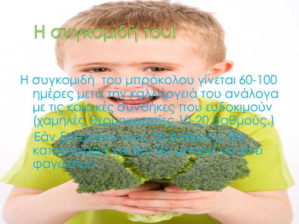 Η συγκομιδή του μπρόκολου γίνεται 60-100 ημέρες μετά την καλλιέργειά του ανάλογα με τις καιρικές συνθήκες που ευδοκιμούν (χαμηλές θερμοκρασίες 10-20 β
