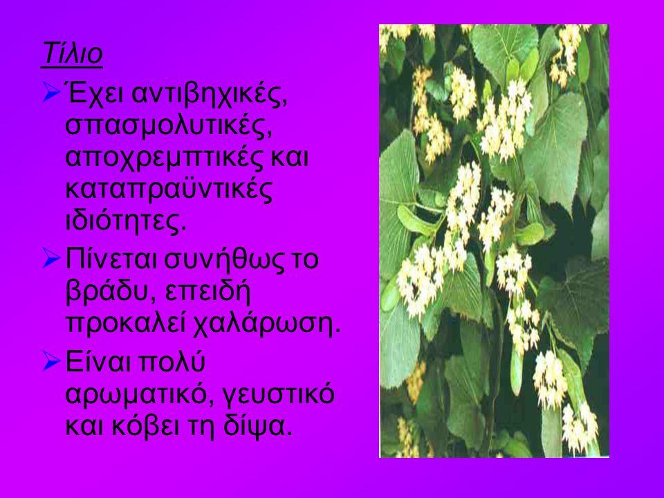 Λουίζα  Έντονη μυρωδιά λεμονιού. Έχει τονωτικές, αντιπυρετικές και διουρητικές ιδιότητες.