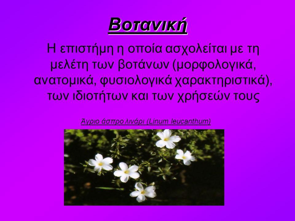 Βοτανική Η επιστήμη η οποία ασχολείται με τη μελέτη των βοτάνων (μορφολογικά, ανατομικά, φυσιολογικά χαρακτηριστικά), των ιδιοτήτων και των χρήσεών τους Άγριο άσπρο λινάρι (Linum leucanthum)