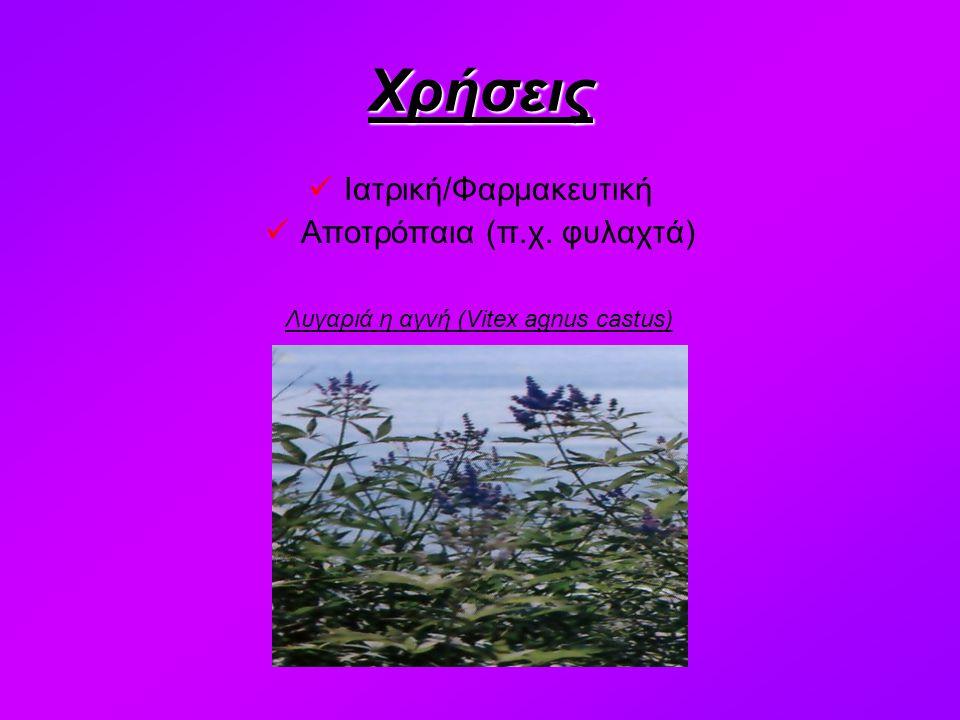 Χρήσεις Ιατρική/Φαρμακευτική Αποτρόπαια (π.χ. φυλαχτά) Λυγαριά η αγνή (Vitex agnus castus)