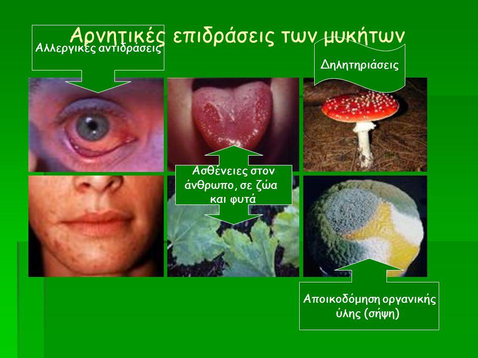 Αλλεργικές αντιδράσεις Ασθένειες στον άνθρωπο, σε ζώα και φυτά Δηλητηριάσεις Αποικοδόμηση οργανικής ύλης (σήψη) Αρνητικές επιδράσεις των μυκήτων