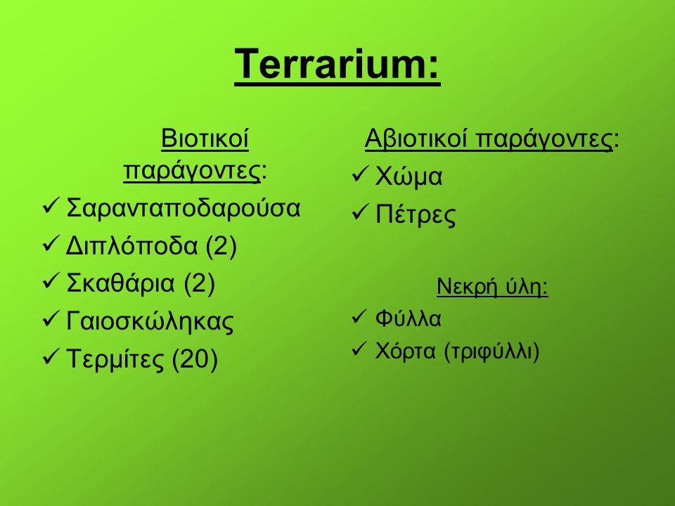 Terrarium: Βιοτικοί παράγοντες: Σαρανταποδαρούσα Διπλόποδα (2) Σκαθάρια (2) Γαιοσκώληκας Τερμίτες (20) Αβιοτικοί παράγοντες: Χώμα Πέτρες Νεκρή ύλη: Φύ