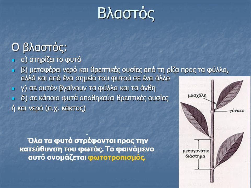 Βλαστός Ο βλαστός: Ο βλαστός: α) στηρίζει το φυτό α) στηρίζει το φυτό β) μεταφέρει νερό και θρεπτικές ουσίες από τη ρίζα προς τα φύλλα, αλλά και από έ