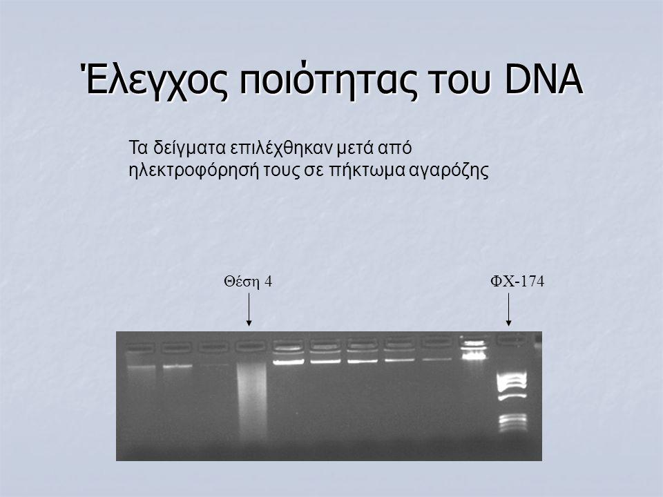 Έλεγχος ποιότητας του DNA Θέση 4 ΦΧ-174 Τα δείγματα επιλέχθηκαν μετά από ηλεκτροφόρησή τους σε πήκτωμα αγαρόζης