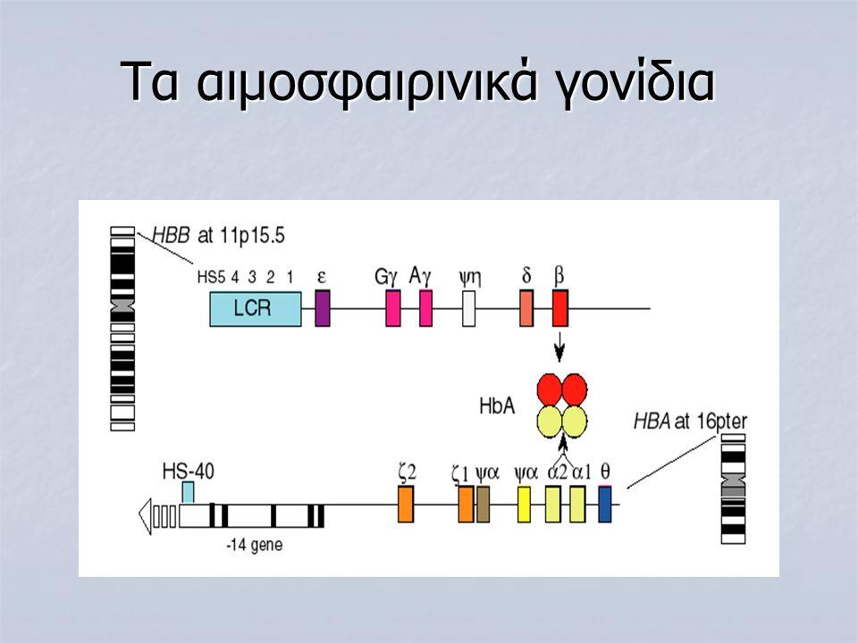 Τα αιμοσφαιρινικά γονίδια Τα αιμοσφαιρινικά γονίδια