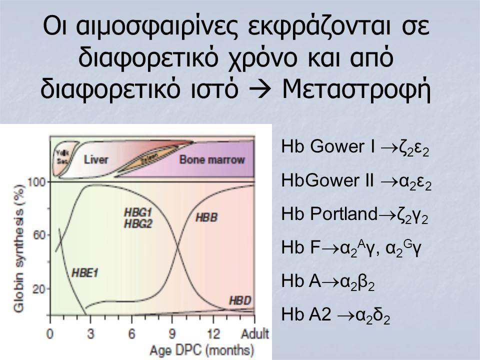 Ηb Gower I  ζ 2 ε 2 HbGower II  α 2 ε 2 Hb Portland  ζ 2 γ 2 Hb F  α 2 Α γ, α 2 G γ Hb A  α 2 β 2 Ηb A2  α 2 δ 2 Oι αιμοσφαιρίνες εκφράζονται σε