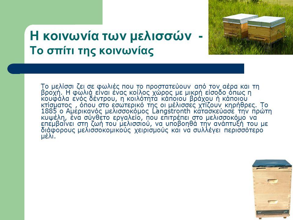 Η κοινωνία των μελισσών Η μέλισσα είναι κοινωνικό έντομο και ζει σε πολυάριθμες, καλά οργανωμένες κοινωνίες τα μελίσσια.